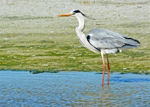 birding-046_edited-1