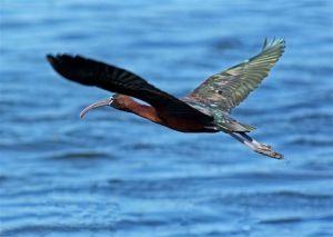 birding-057_edited-1