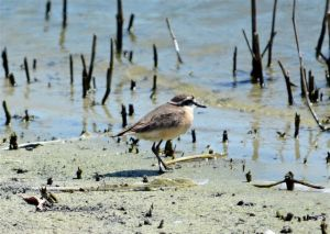birding-089_edited-1