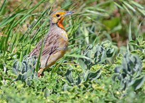 birding-099_edited-1
