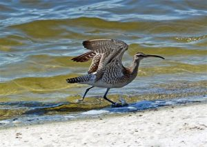 birding-119_edited-1