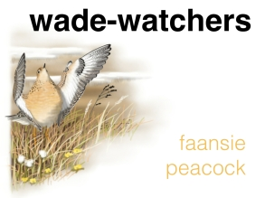 Wader course 3.1.001