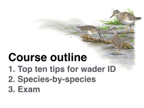 Wader course 3.1.009